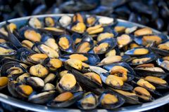 Plate of fresh mussels Royalty Free Stock Image
