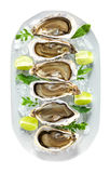 Plate with fresh oysters on ice, with clipping path. Stock Photography