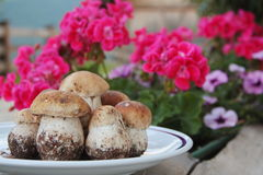 Plate of fresh Porcini mushrooms with red flowers in background. Plate full of fresh Porcini mushrooms with red flowers in background Stock Photo