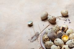 Plate with fresh quail eggs decorated with feather. Organic food. Rustic style. Plate with fresh quail eggs decorated with feather. Organic and diet food Stock Photography