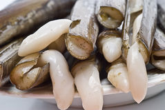 A plate of fresh razor clams. Royalty Free Stock Photo