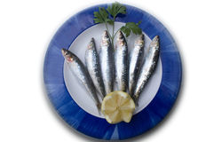Plate of fresh  sardines. Plate of fresh sardines on a white background for restaurant Royalty Free Stock Image