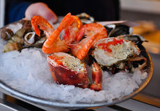 Plate of Fresh Seafood Royalty Free Stock Image