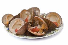 A plate of fresh smooth clams. Smooth clams with lemon and isolated on a white background Royalty Free Stock Image