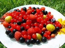 Fresh red and black currant, raspberries, blueberr Stock Images