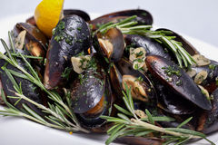 Plate of Freshly cooked mussels Stock Photos
