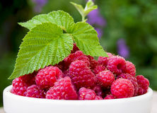 A plate full of fresh ripe raspberries with green leaf raspberry Royalty Free Stock Image