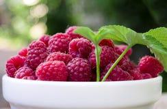 A plate full of fresh ripe raspberries with green leaf raspberry Royalty Free Stock Photo
