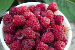A plate full of fresh ripe raspberries with green leaf raspberry Royalty Free Stock Images