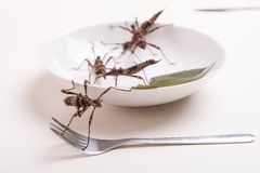 Plate full of insects in insect to eat restaurant Royalty Free Stock Photos