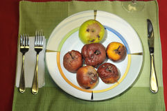 Plate full of rotten apples Royalty Free Stock Images