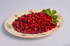 Plate full of wild strawberries Royalty Free Stock Images