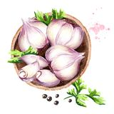 Plate with garlic, top view. Watercolor hand drawn illustration, isolated on white background.  Royalty Free Stock Photo