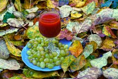 A plate with grapes and a glass with a red drink stand on yellow leaves Royalty Free Stock Image
