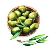 Plate of green olives, top view. Watercolor illustration/. Plate of green olives, top view. Watercolor illustration Stock Photography