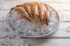 Plate with ice and shrimps. Stock Photos