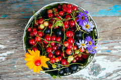 A plate of leaves and berries of black and red currant with a flower on a wooden Stock Photography
