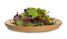 Plate with mix of salads. On white background Royalty Free Stock Photo