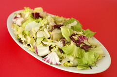 Plate of mixed salad. A fresh plate of mixed italian salad isolated on a n uniform background with space to write at upper right and lower left stock photos