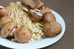 Plate of Mushrooms Royalty Free Stock Images