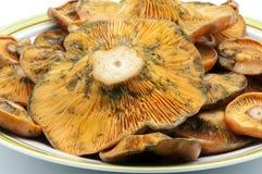 Plate of mushrooms Stock Photos