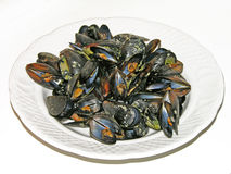 Plate of mussels Royalty Free Stock Photography