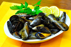 Plate of mussels. With parsley on mats orange royalty free stock images