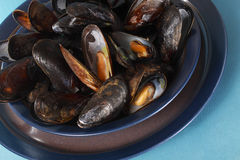 Plate of mussels Royalty Free Stock Image