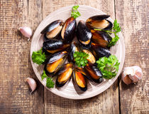 Plate of mussels with parsley Stock Images