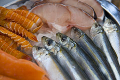 Plate Of Fresh Fish Stock Image