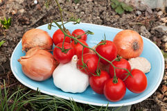 Plate with onions, tomatoes, garlicand ginger Stock Photography