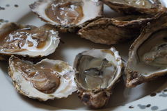 Plate of open oysters Royalty Free Stock Photography