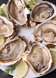 Plate of oyster Royalty Free Stock Image