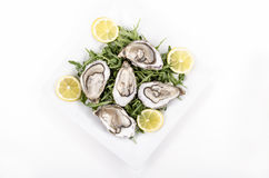 Plate with oyster and lemon slices Stock Image