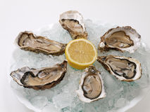 Plate of oysters. Oysters placed on ice in a plate Royalty Free Stock Image
