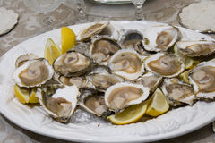 Plate of oysters Royalty Free Stock Image