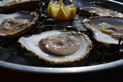 Plate of oysters Stock Images
