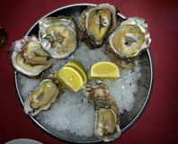 Plate with oysters and slices of lemon on ice. Plate with oysters in mother-of-pearl shells and slices of lemon Stock Images