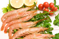 Plate With Prawns Royalty Free Stock Image