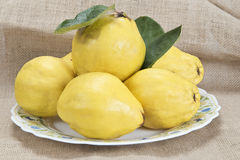 Plate with quinces. Plate with premium fresh quinces freshly harvested to cook Royalty Free Stock Photography