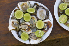 Plate of raw oysters Royalty Free Stock Photo