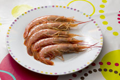 Plate with raw prawns Stock Image