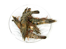 Plate with raw shrimp Royalty Free Stock Photo