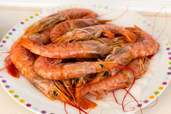 Plate with raw shrimp Stock Image