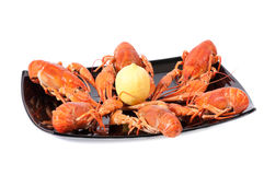 Plate of red boiled lobsters. With lemon. Luxury diet meal Stock Images