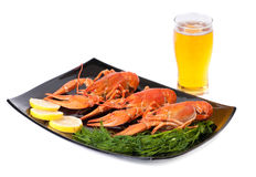 Plate of red boiled lobsters. With dill and glass of beer. Luxury diet meal Stock Photos