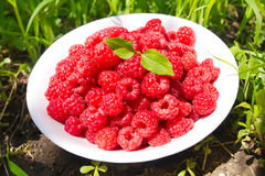 A plate with ripe berries of raspberry Stock Images