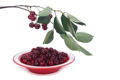Plate with ripe cherries and and branch with green leaves Stock Photo