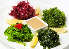 Plate with salad Chuka Seaweed with lemon and peanut sauce Stock Photography