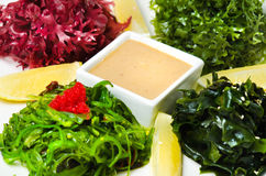 Plate with salad Chuka Seaweed with lemon and peanut sauce Royalty Free Stock Photos